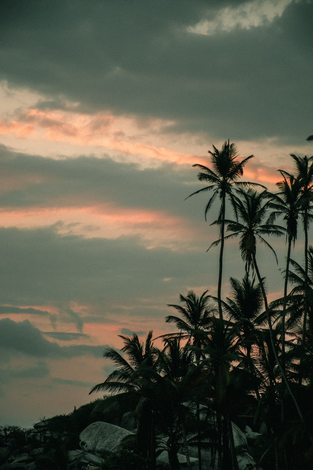 green palm trees under cloudy sky during daytime