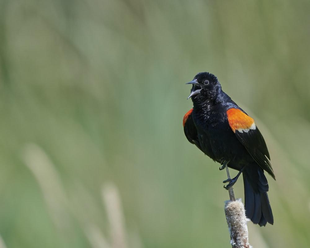 black and orange bird on brown tree branch during daytime