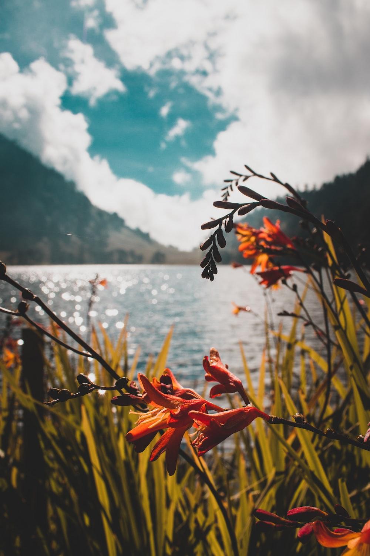 orange flower near body of water during daytime