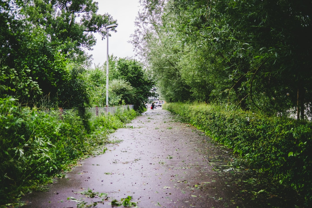 person in white shirt and black pants walking on pathway between green grass and trees during
