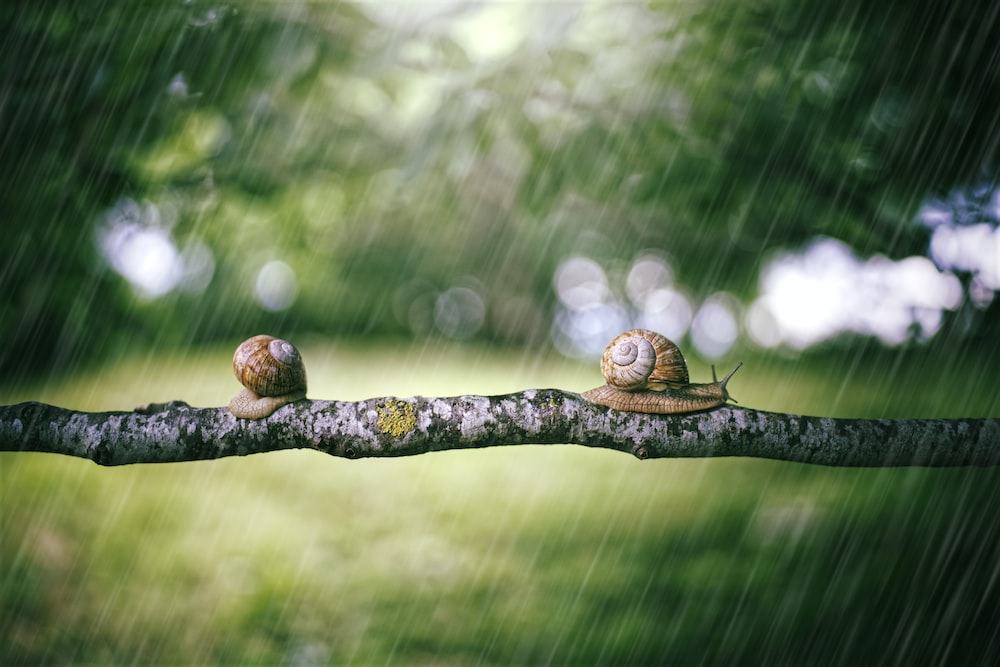 brown snail on brown tree branch