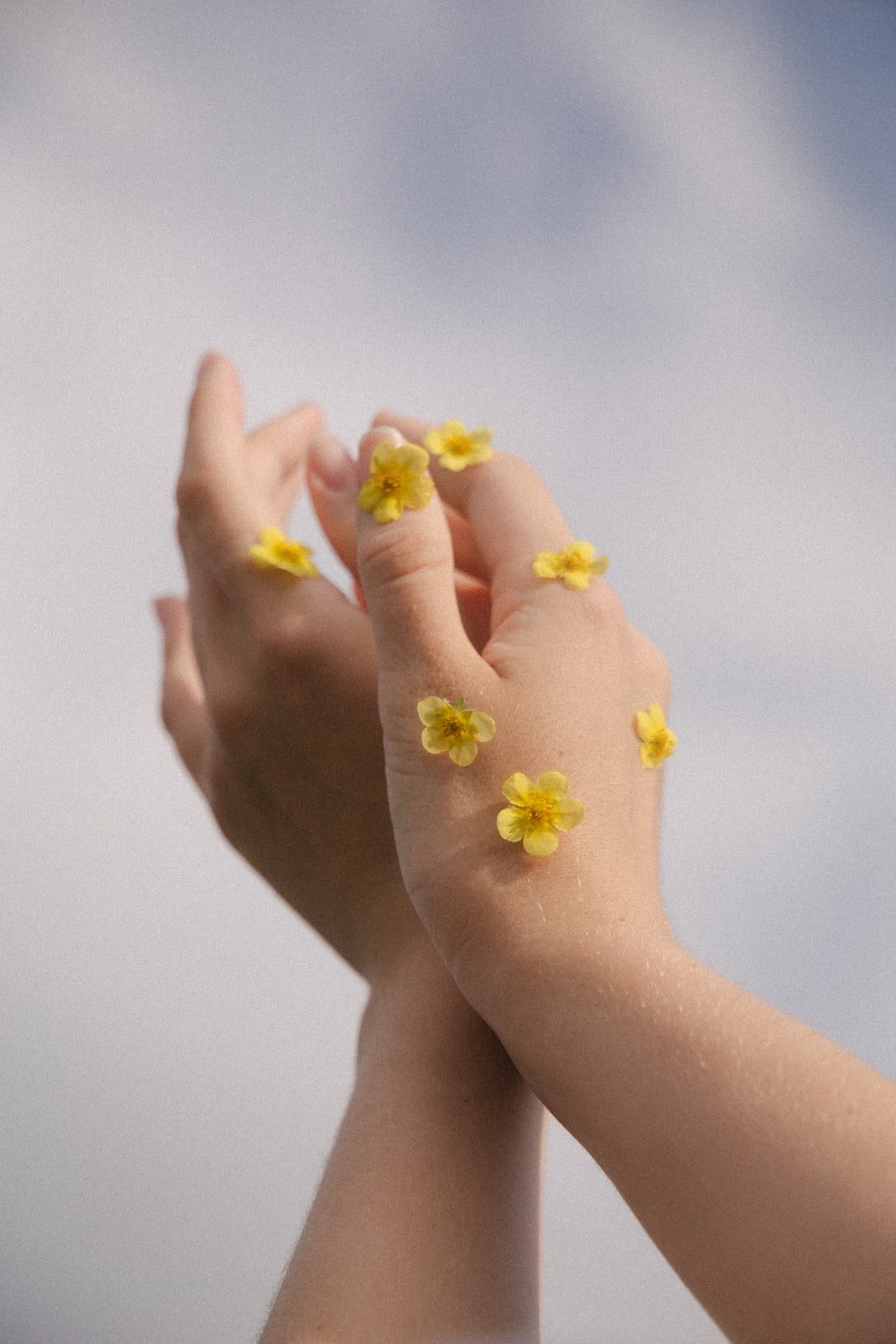 person holding yellow flower petals