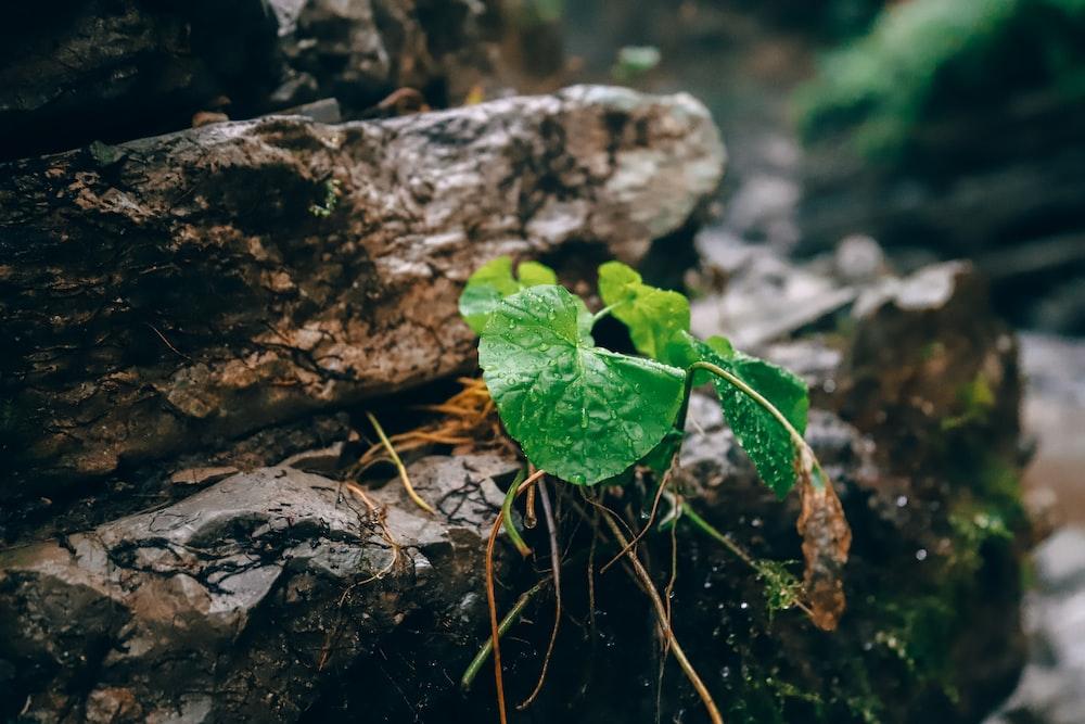 green leaf plant on brown rock