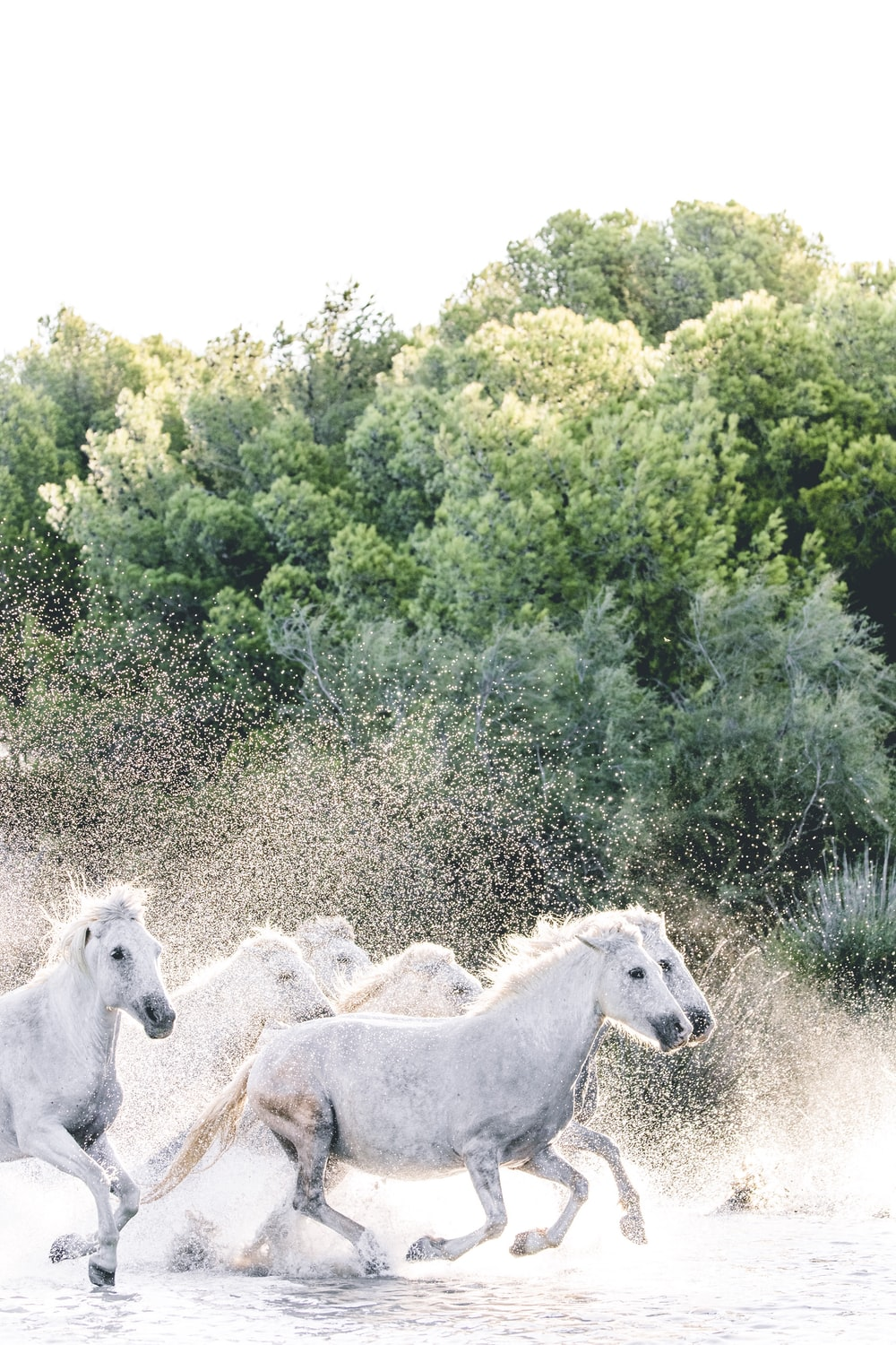 white horses on green grass field during daytime