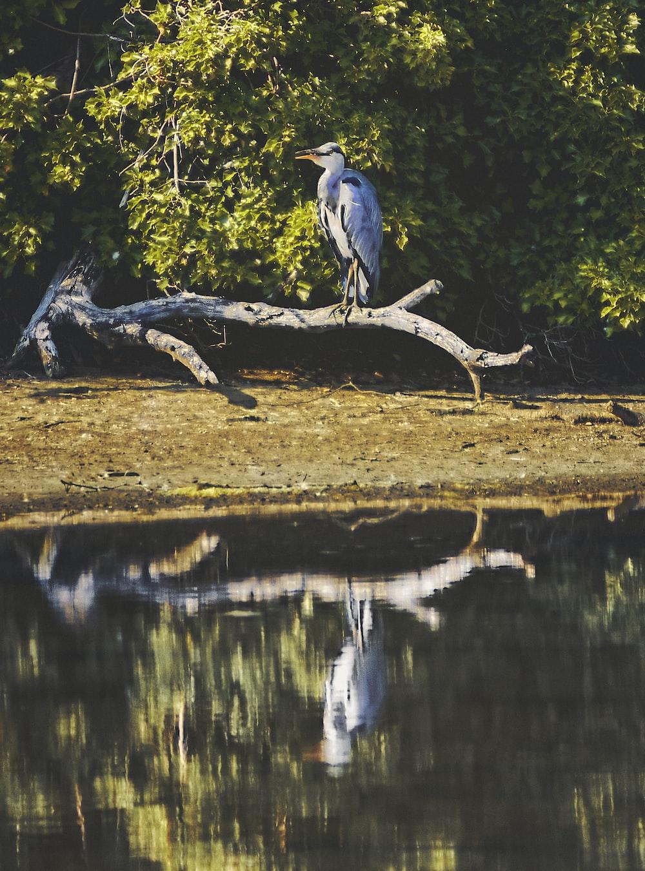gray bird on brown tree branch near lake during daytime
