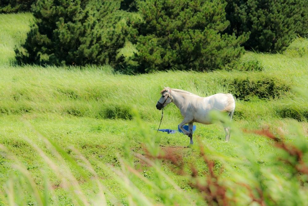 white horse running on green grass field during daytime