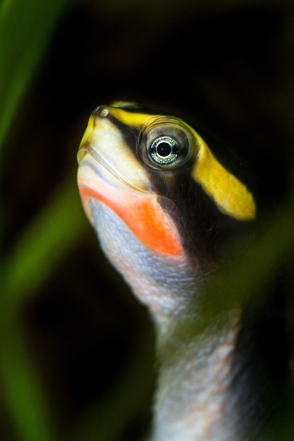 yellow and black fish in close up photography
