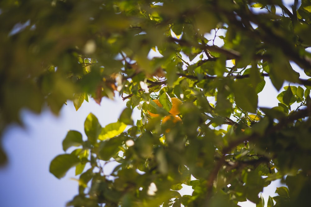 green and brown tree leaves
