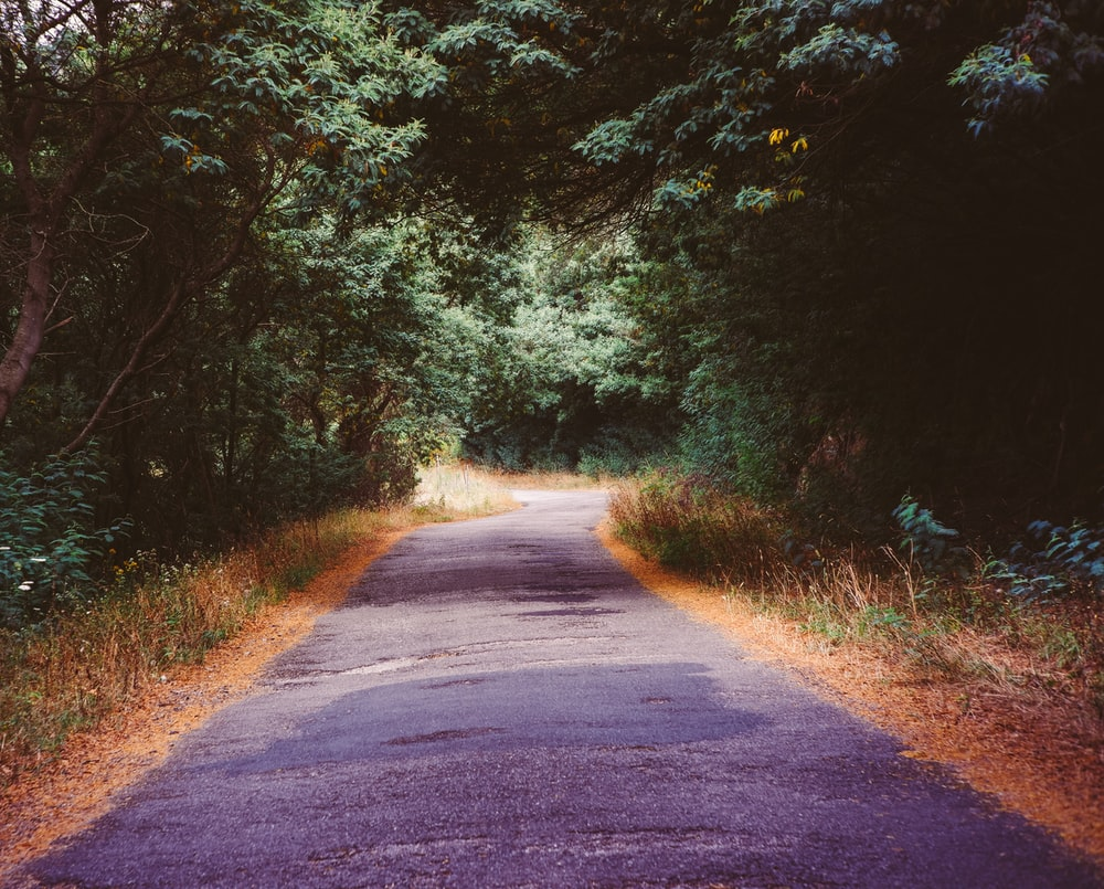 gray asphalt road between green trees during daytime