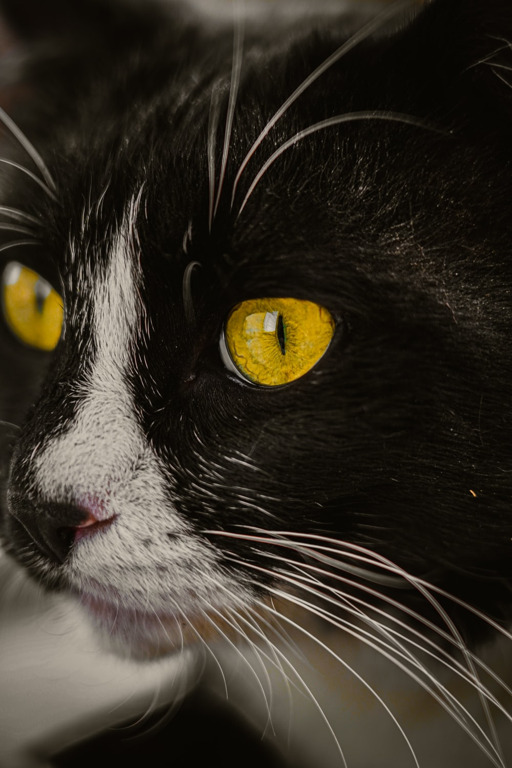 black and white cat with yellow eyes