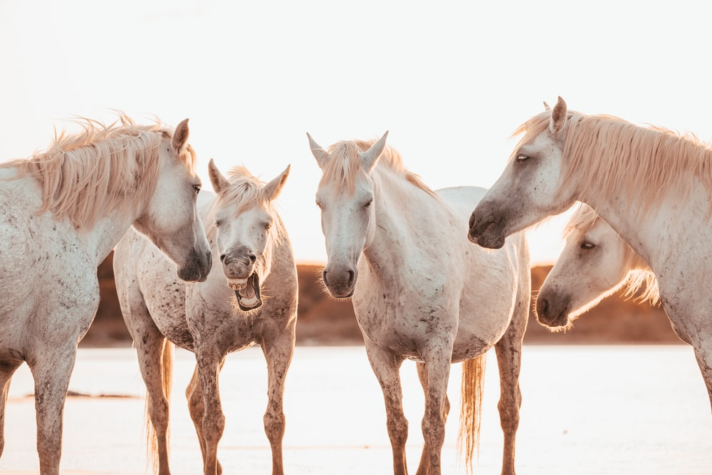 white horse on brown sand during daytime