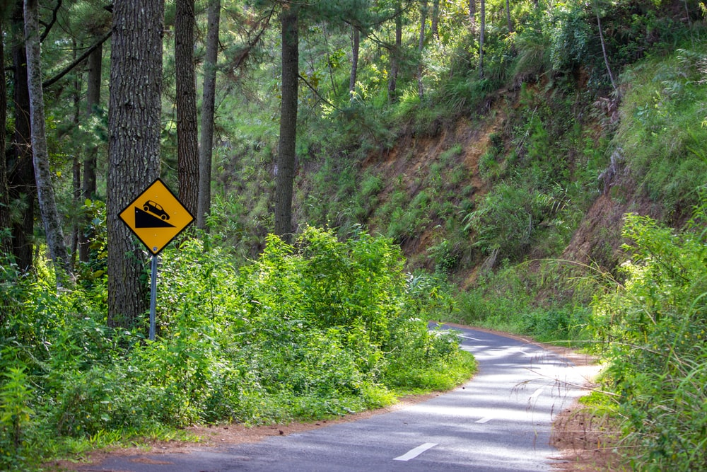 yellow and black road sign near green trees during daytime