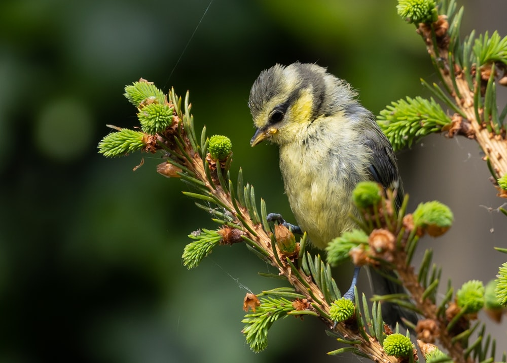 yellow and gray bird on green tree branch