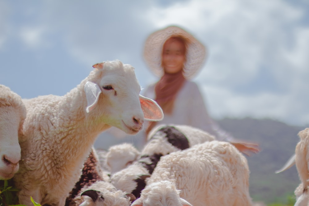 woman in white knit cap standing beside white sheep during daytime