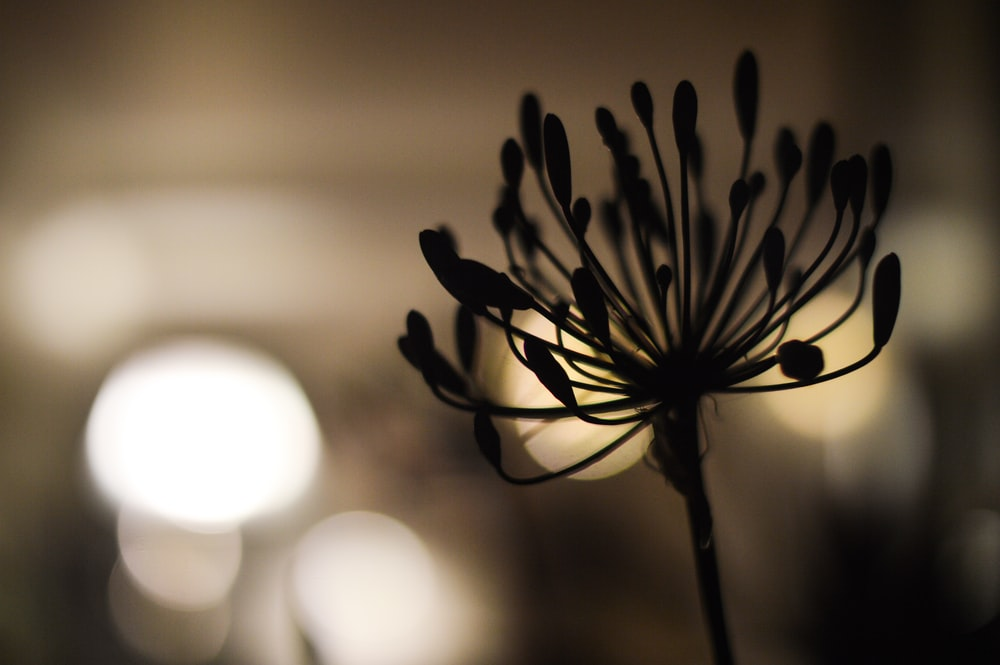 black and white flower in close up photography