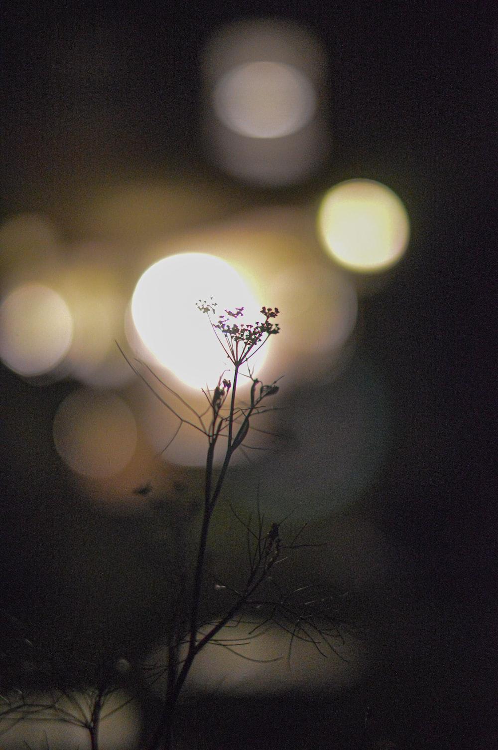 white flower with black stem