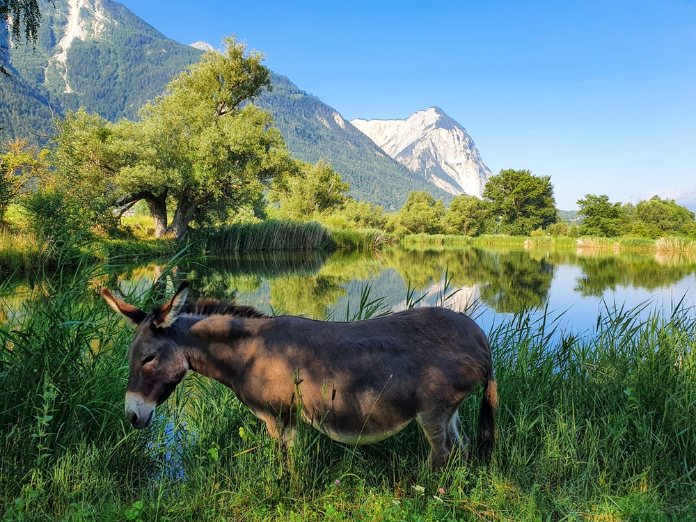 brown horse eating grass near lake and mountain during daytime