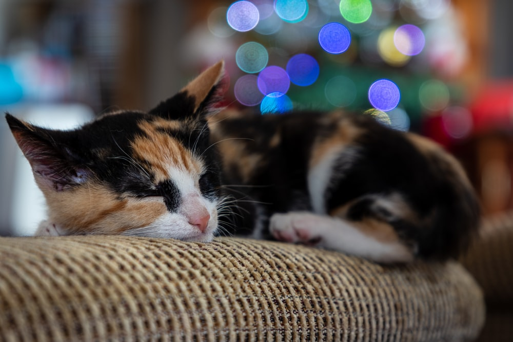 black orange and white cat lying on brown textile