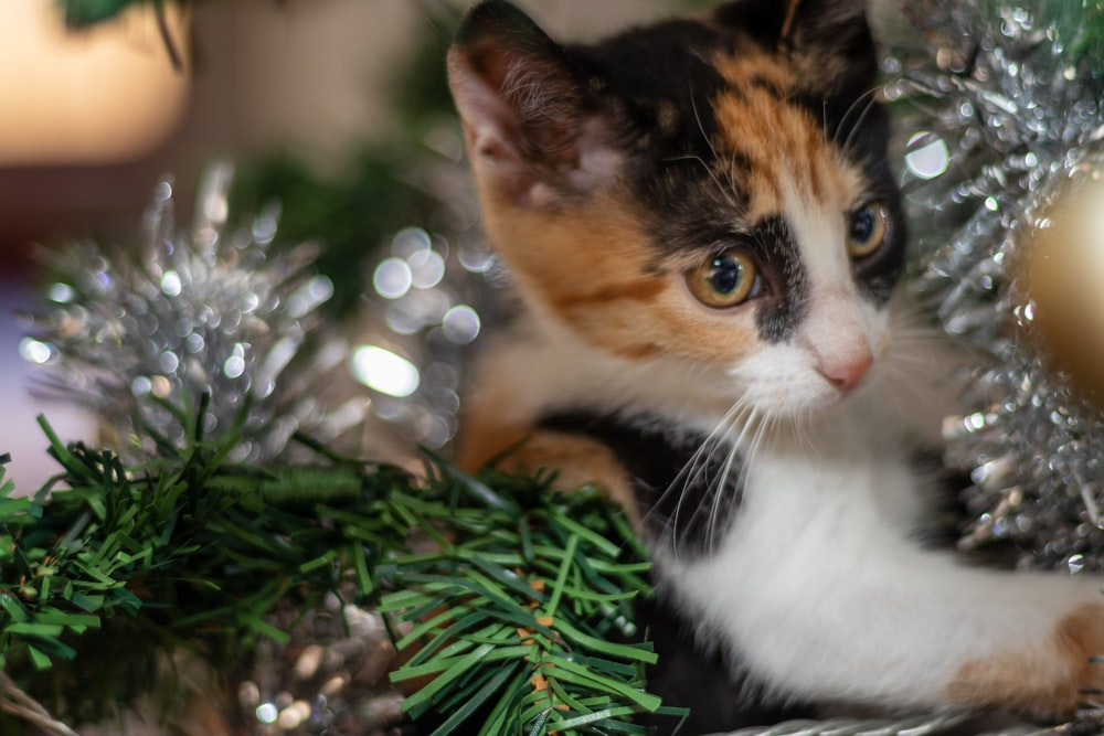 calico cat on green plant