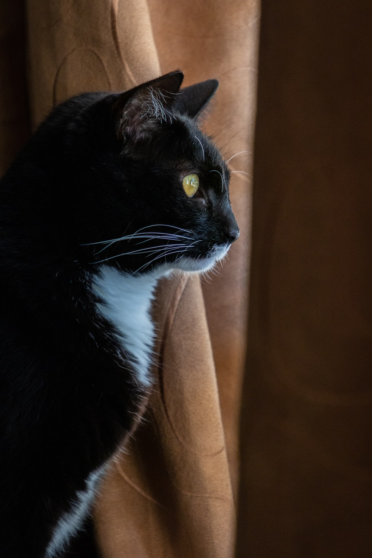 tuxedo cat on brown textile