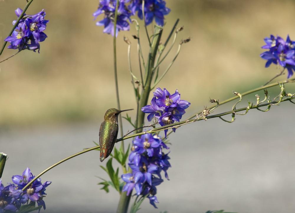 green and brown bird on purple flower