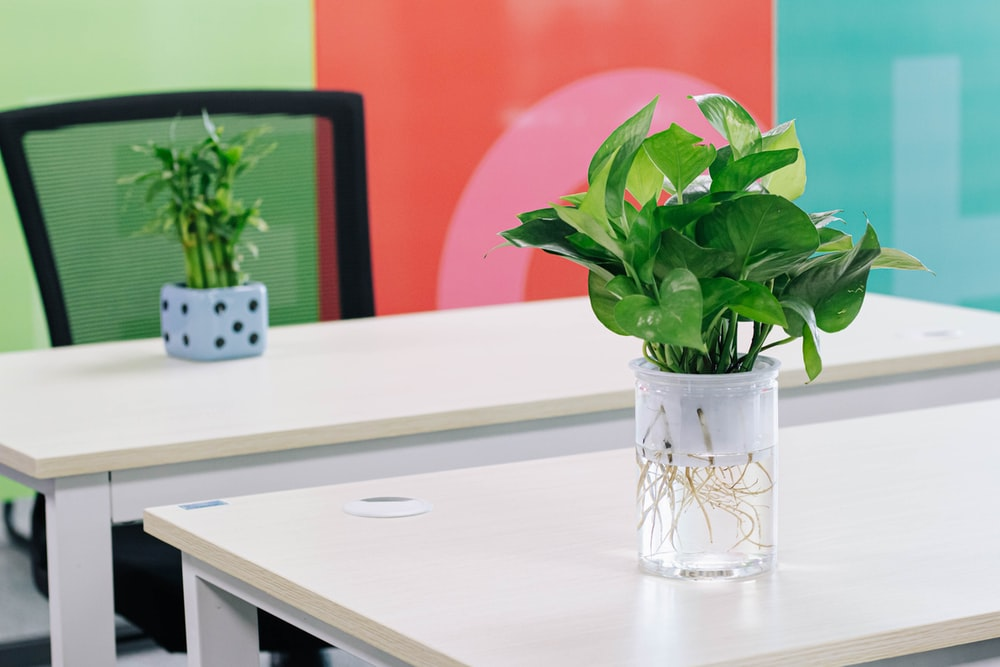 green plant in clear glass vase on white table