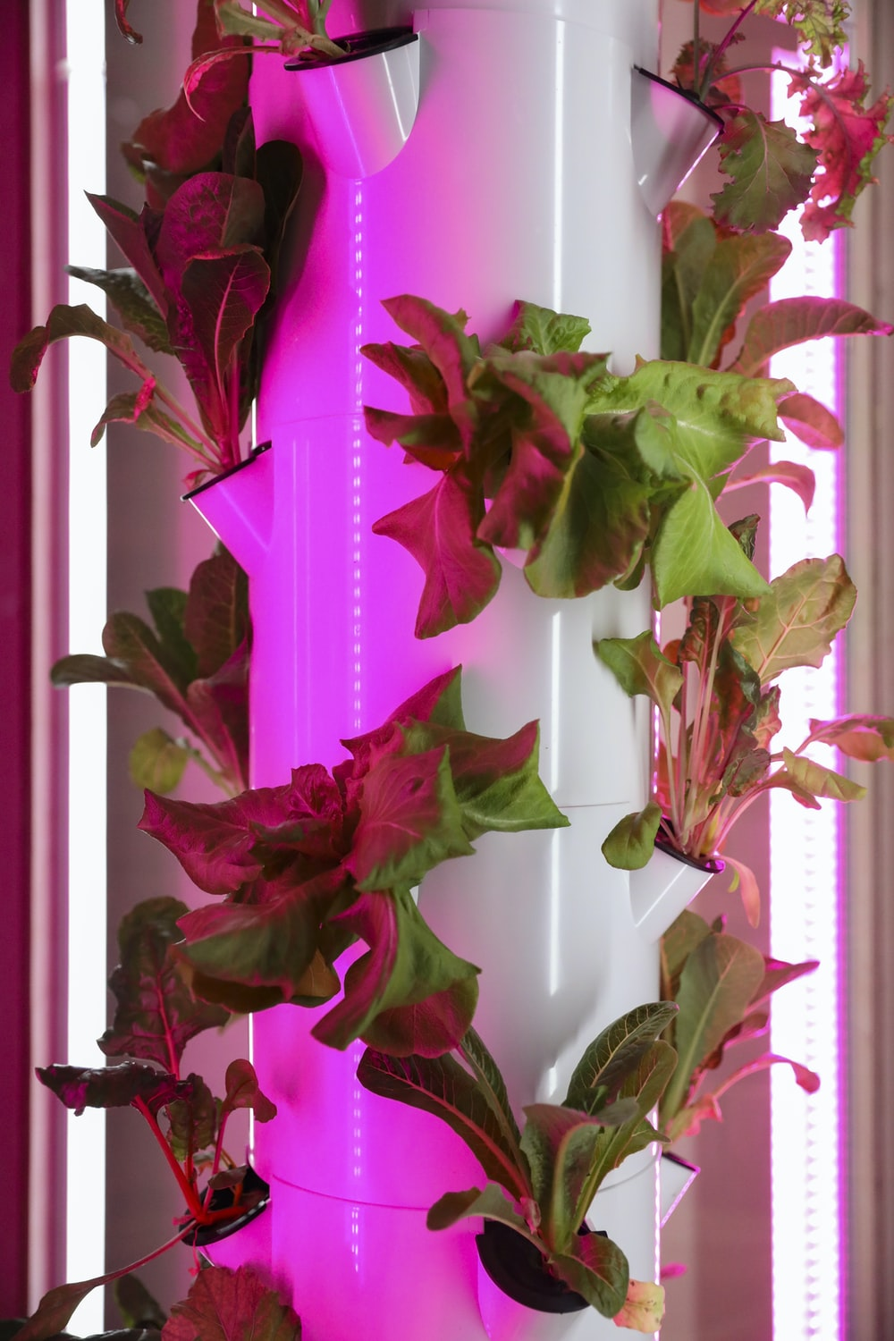 pink and green leaves on white wall