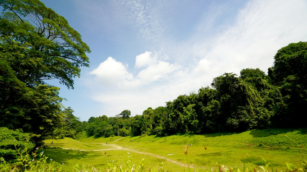 green grass field and trees under white clouds and blue sky during daytime