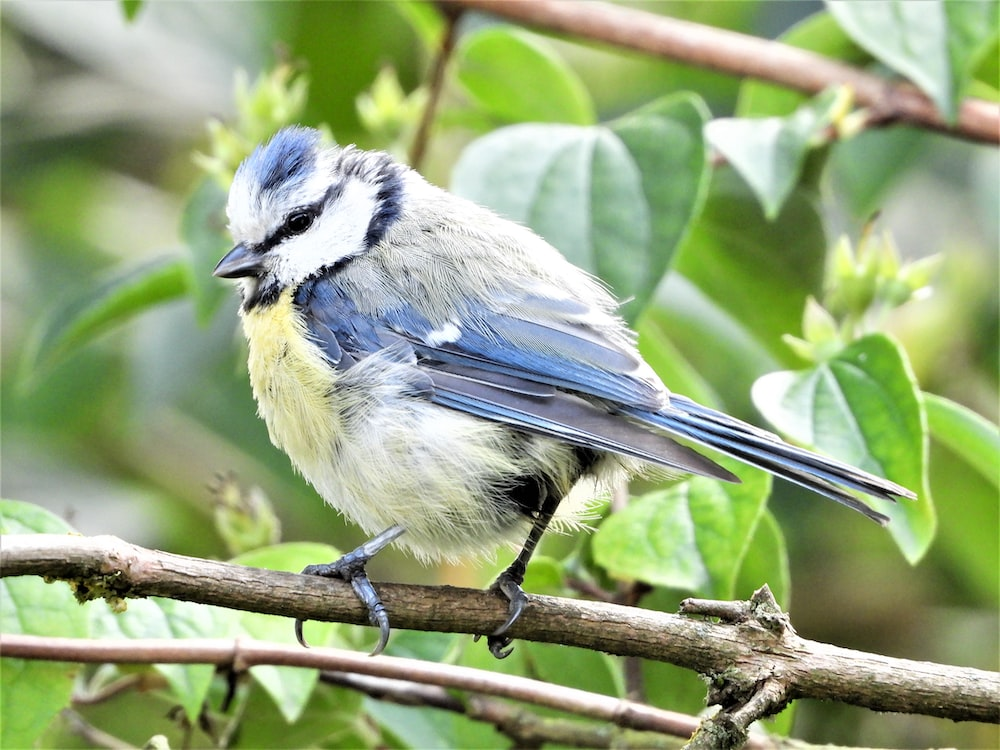 blue and white bird on tree branch during daytime