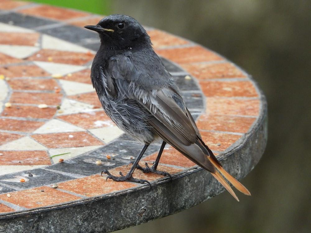 black bird on brown concrete surface
