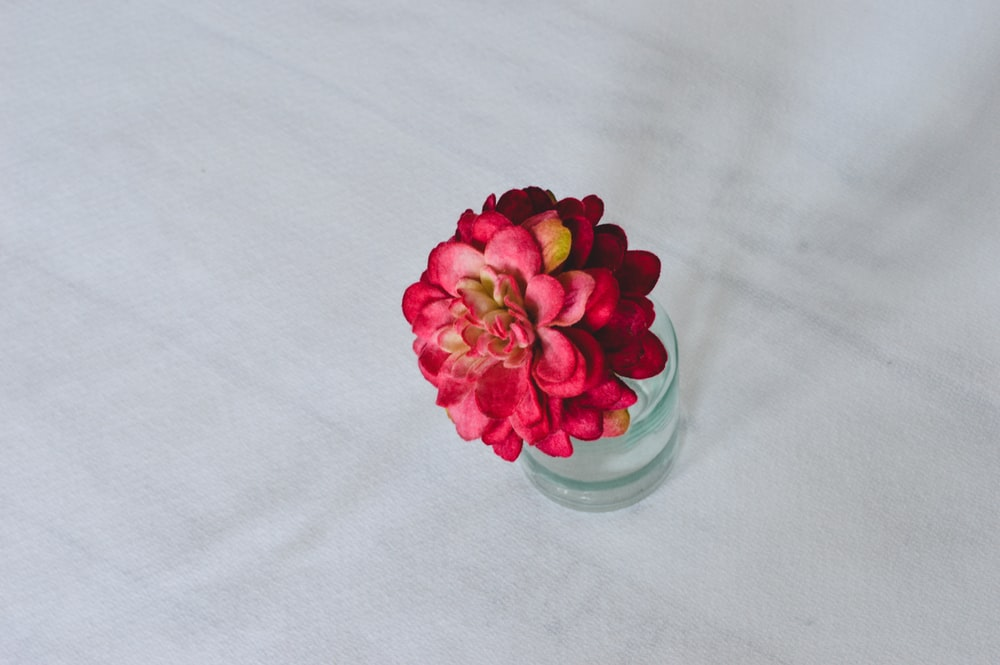 pink flower on clear glass vase