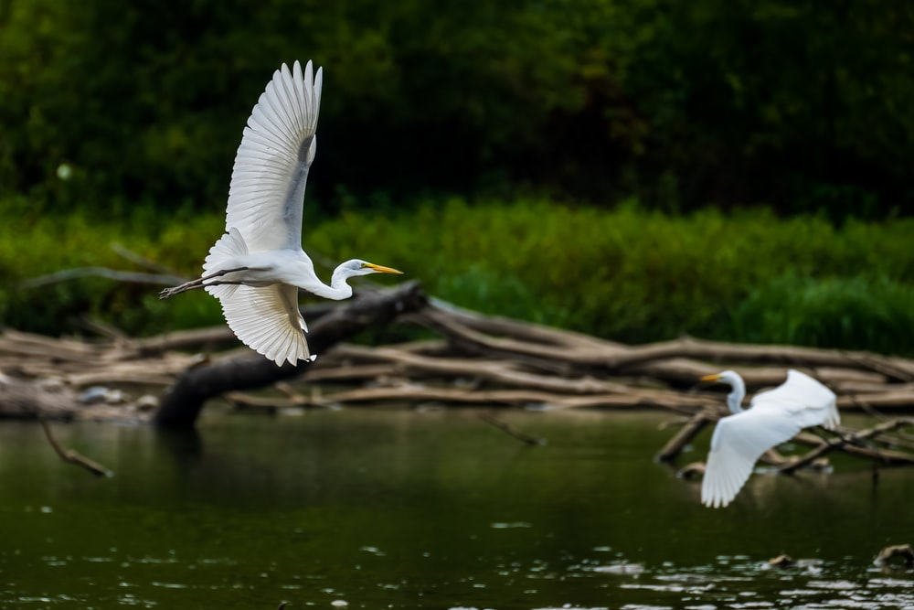white bird flying over body of water during daytime