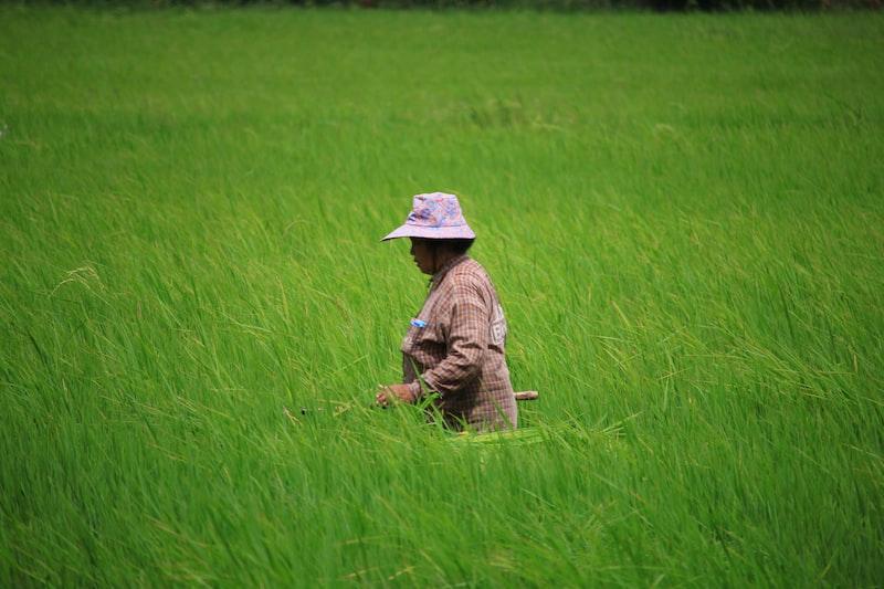 womanstanding on green grass field