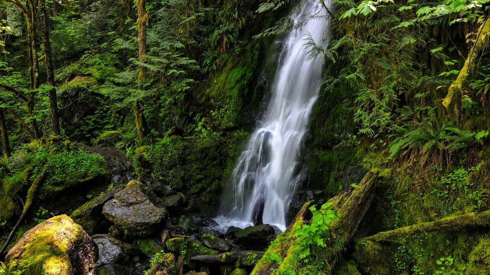 water falls in the middle of the forest