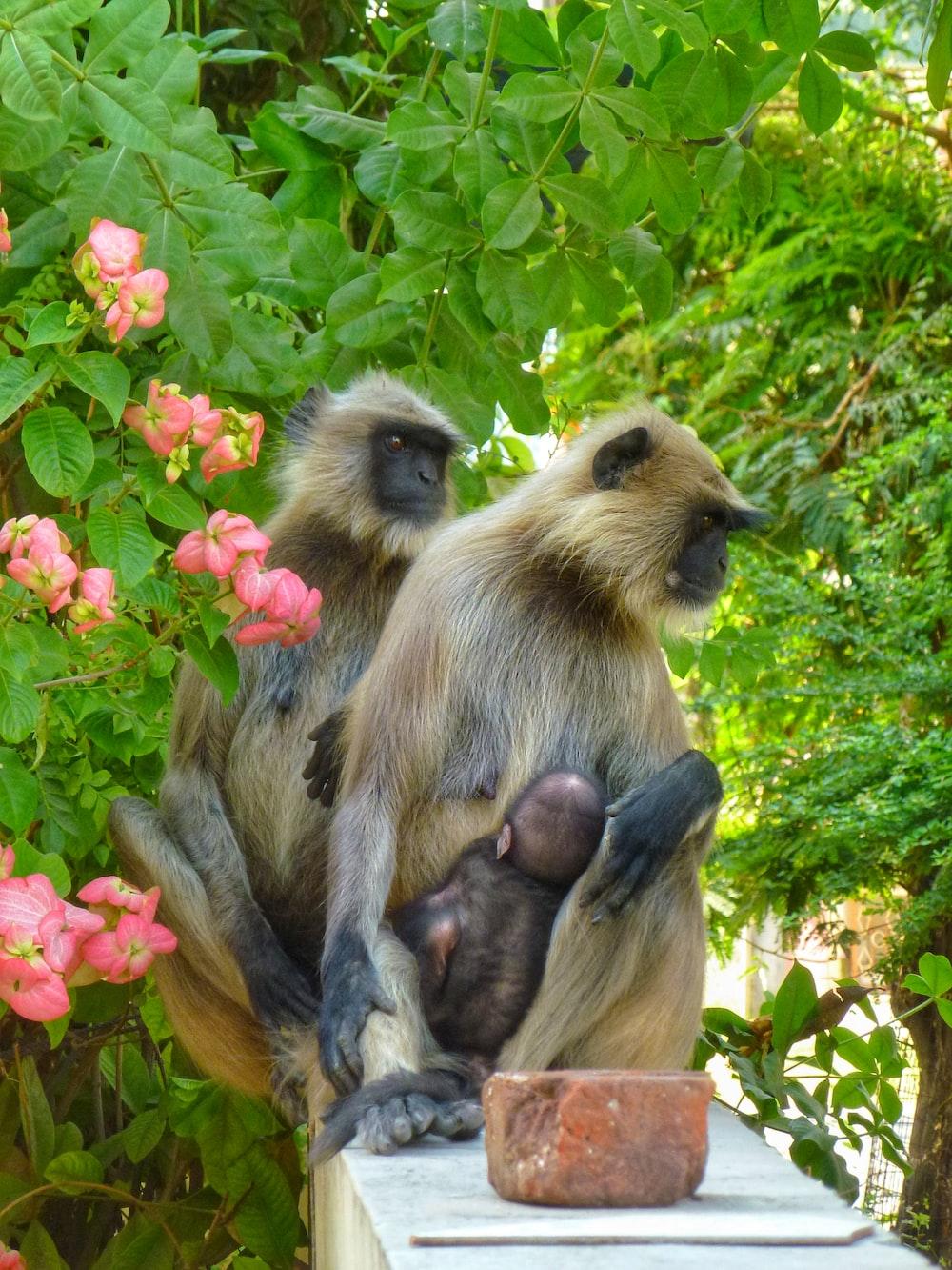 brown monkey sitting on brown tree branch during daytime