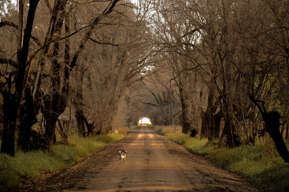 white dog on road between bare trees during daytime
