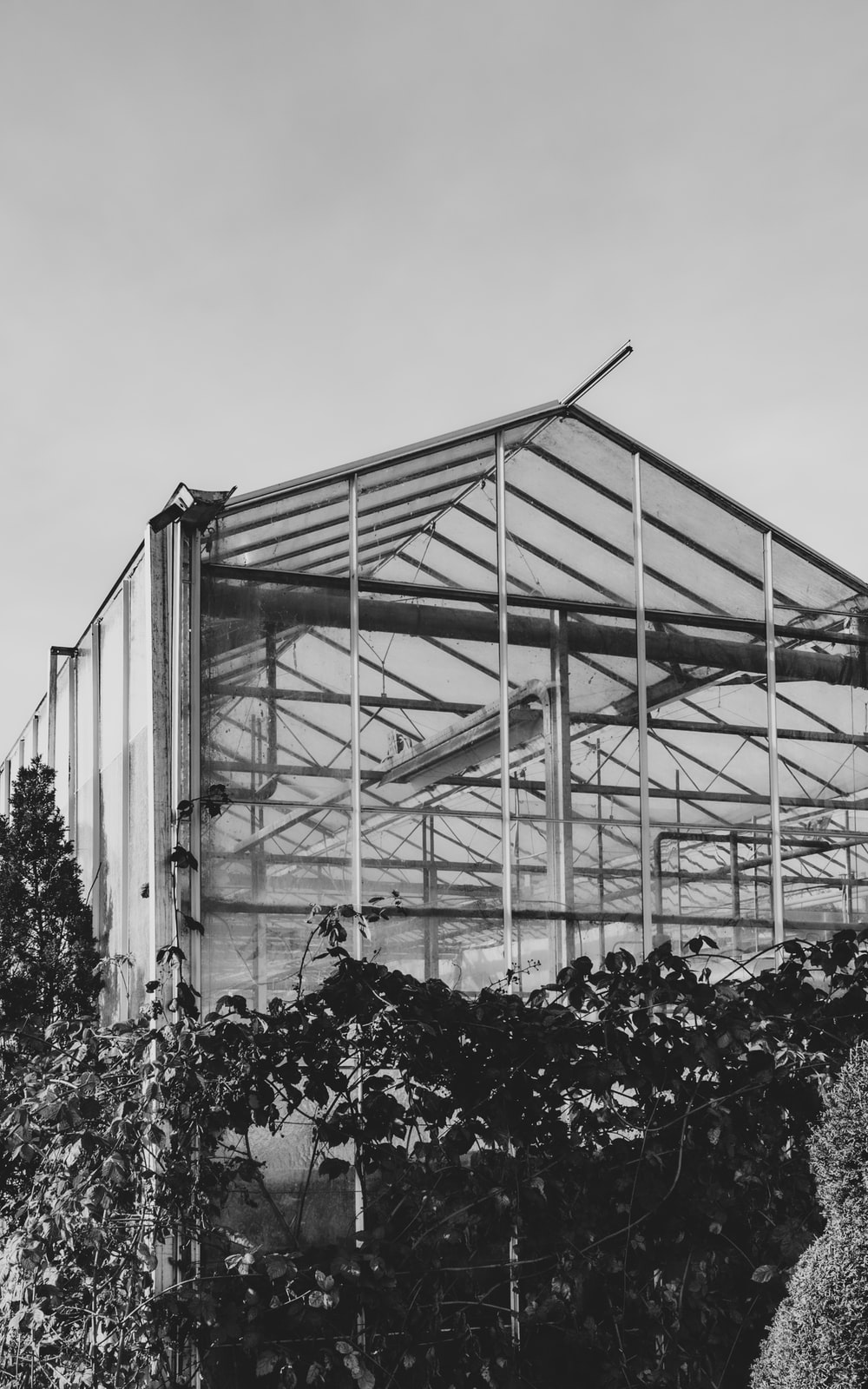 grayscale photo of flowers in greenhouse