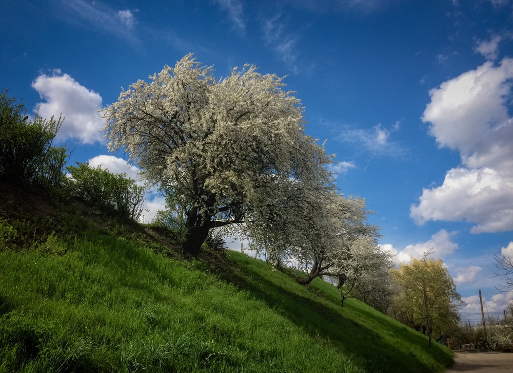 white leaf tree on green grass field under blue sky during daytime
