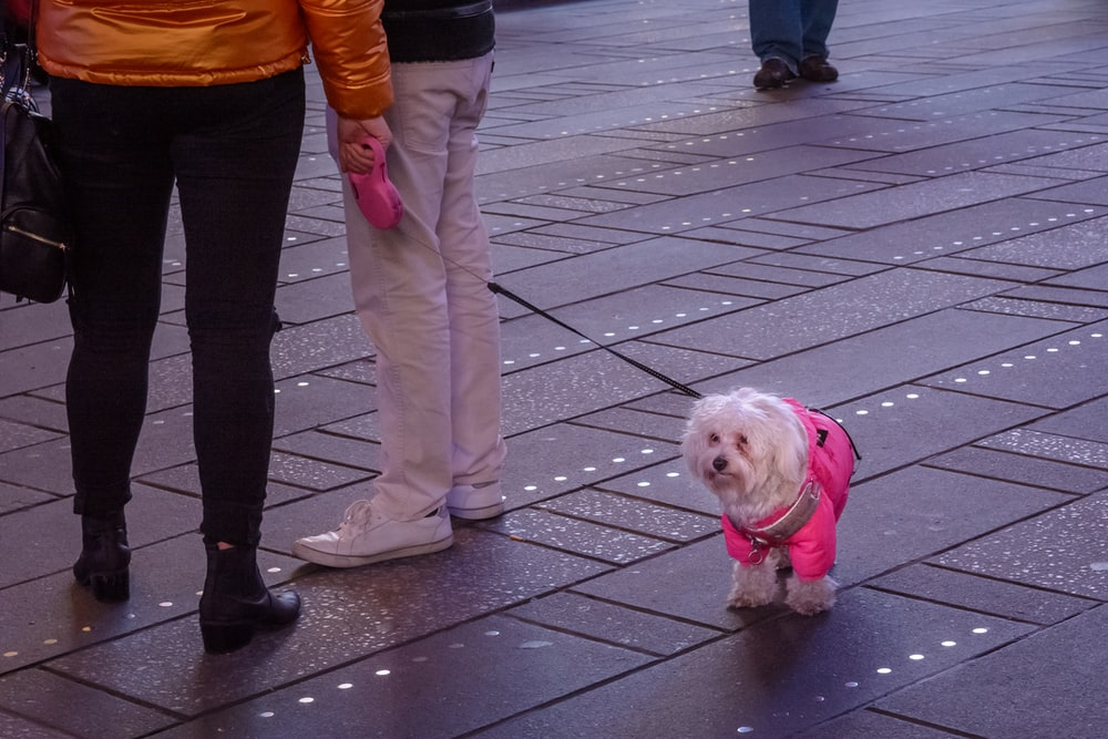 person in brown pants holding white long coated small dog