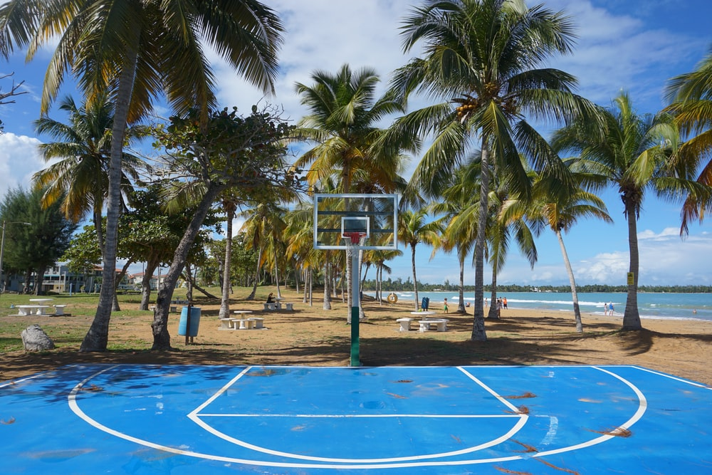 white and blue basketball hoop near palm trees during daytime