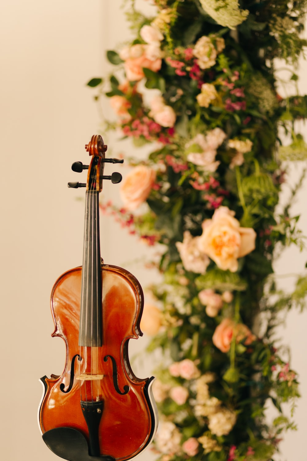 brown violin near green and pink flowers