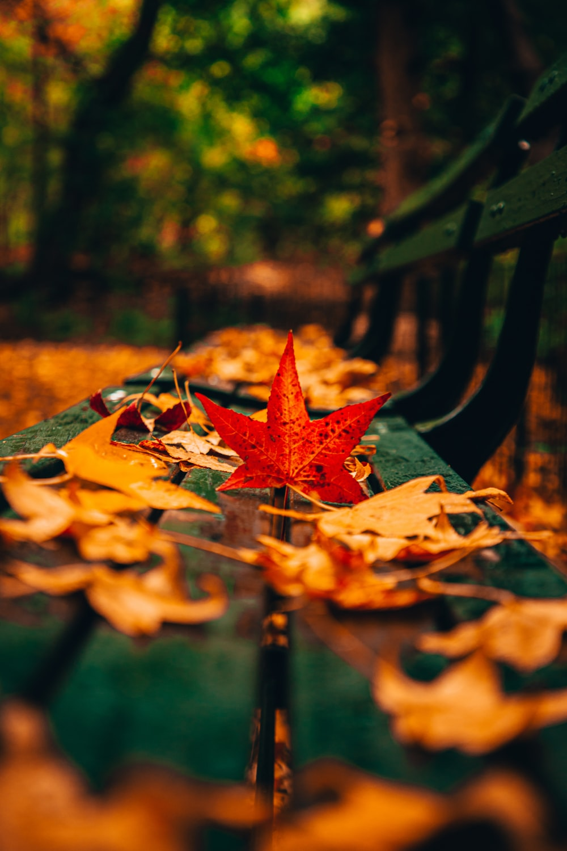 brown maple leaf on black wooden bench