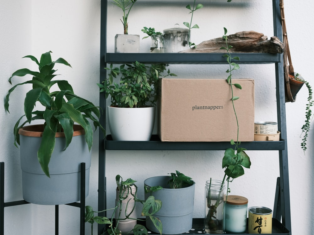 green potted plants on white wooden shelf