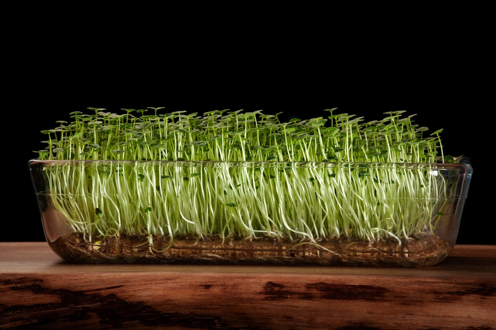 green grass on brown wooden table