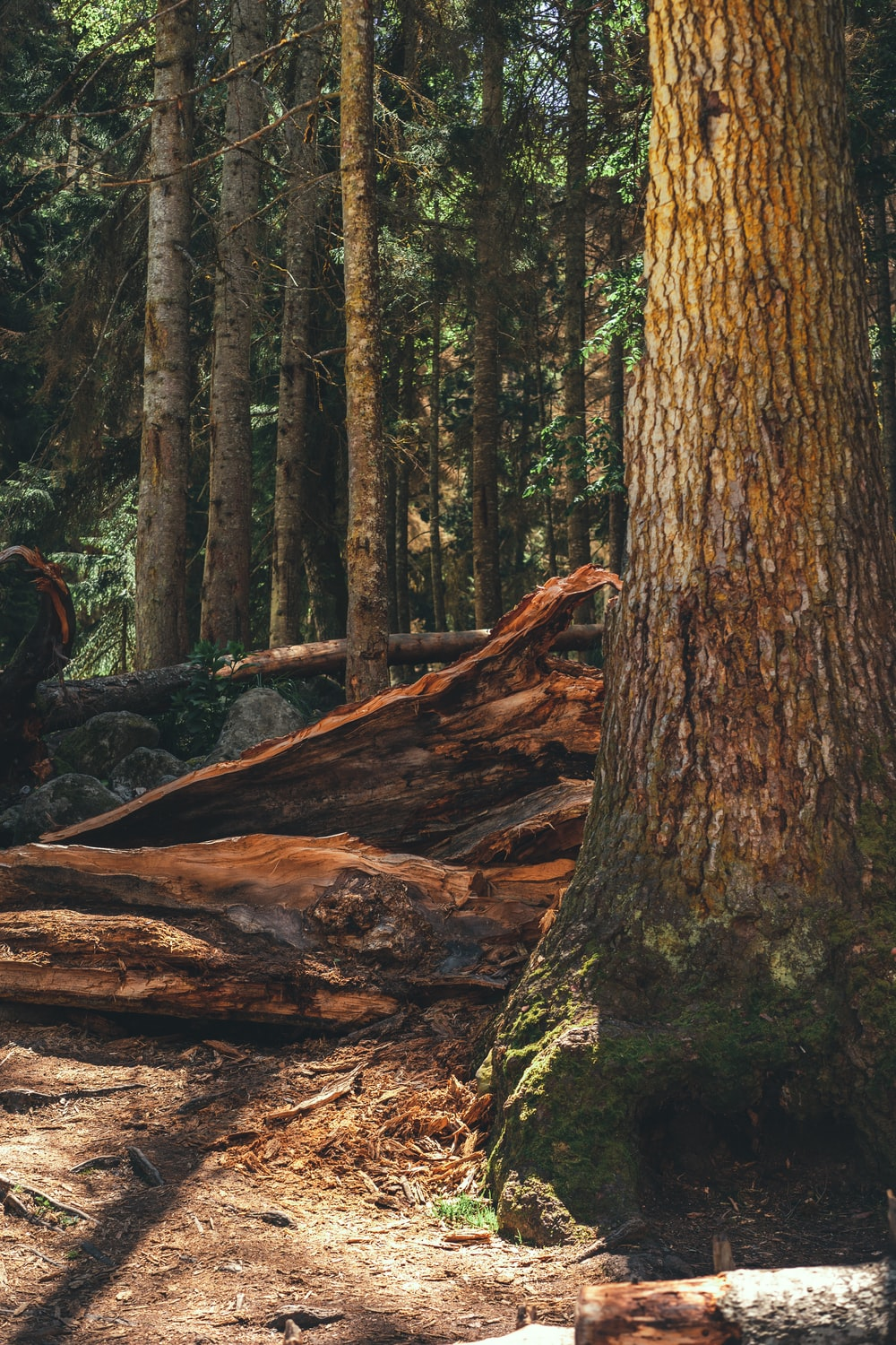 brown tree trunk in forest during daytime