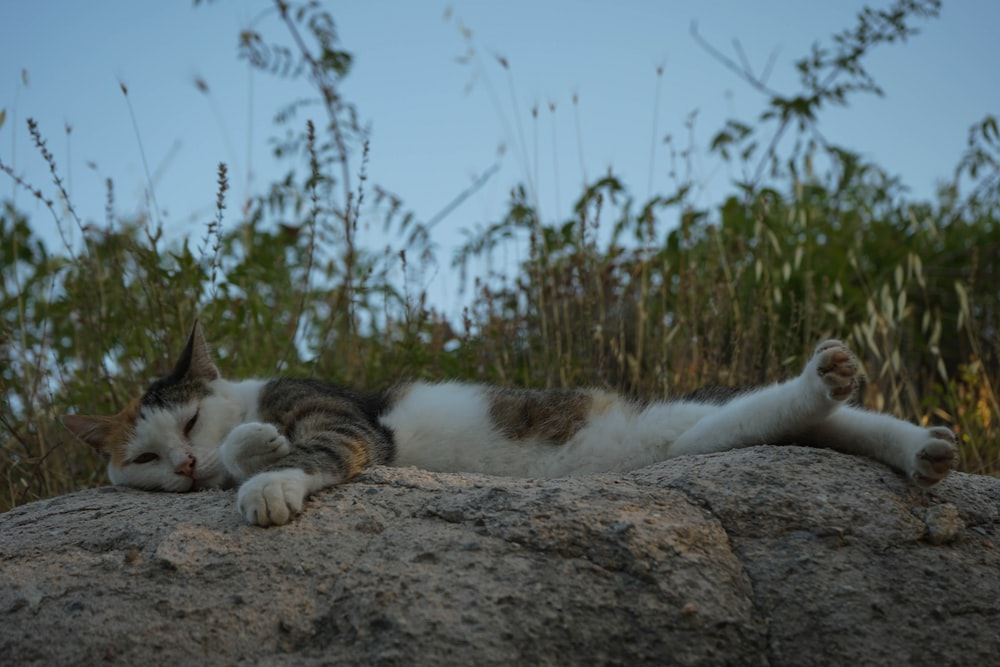 white and brown cat lying on brown soil during daytime