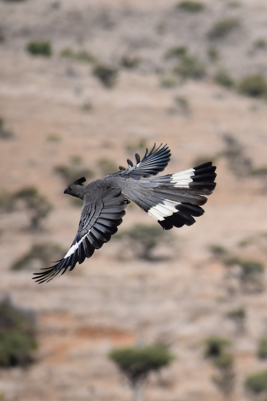 black and white bird flying during daytime