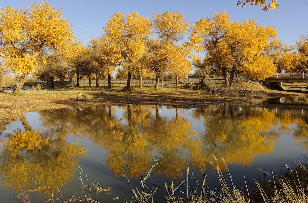 yellow leaf trees near lake during daytime