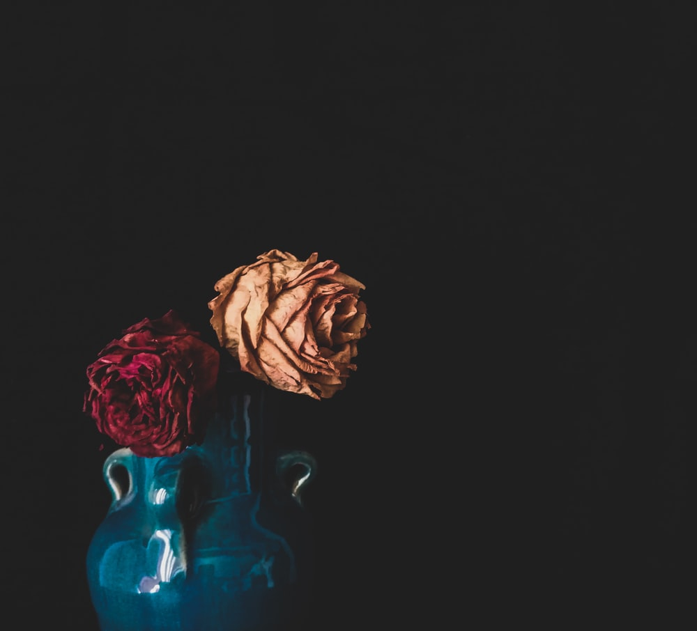 red roses in blue glass vase