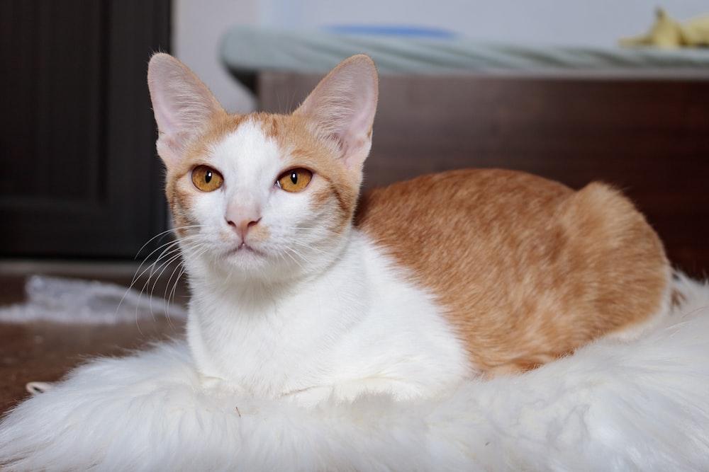 orange and white cat on white textile